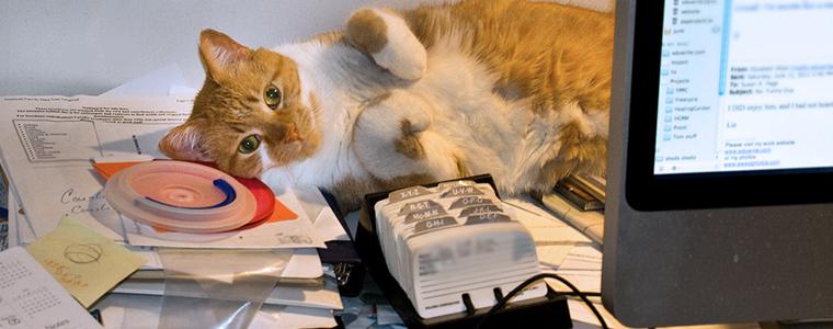 coworking-work-life-balance-cat